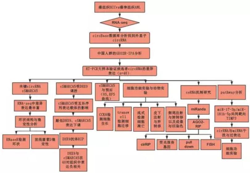 qqhuangseq_通过人类肝癌样本中的rna-seq分析鉴定circular rnas